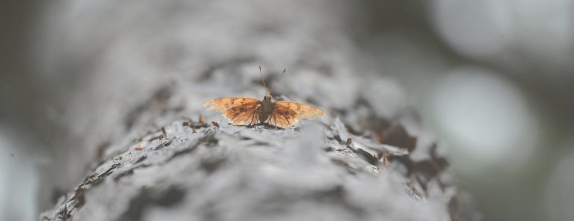 De man en de vlinder