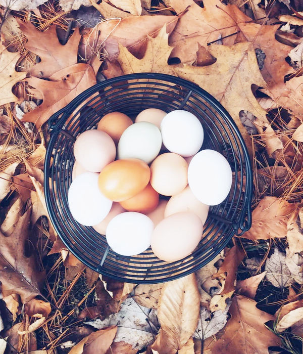 eieren Greetje Komdeur